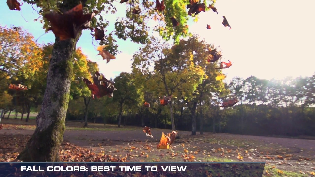 Fall Colors: Best Time To View