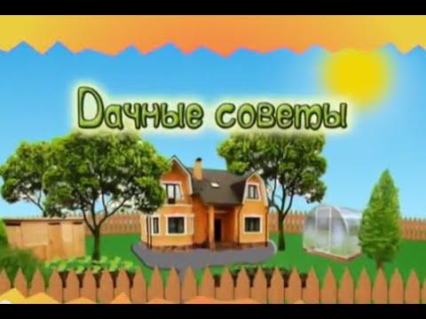 Дачные советы Галины Старосельцевой Октябрь 08-2020