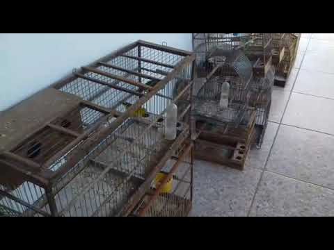 Homem é preso por manter pássaros em cativeiro em Araxá
