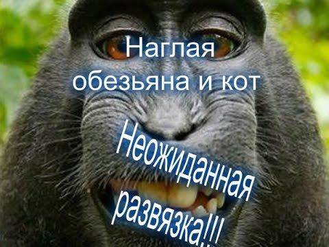 гороскопы кот и обезьяна
