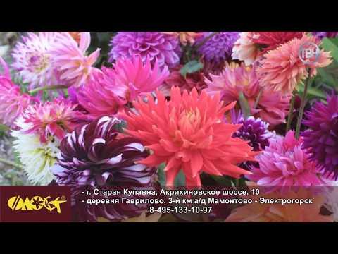 В центре «Флос» в Старой Купавне – распродажа садовых роз. Скидка – 50%