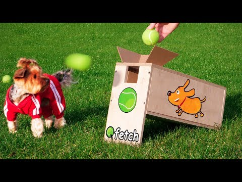 Dog Ball Launcher Your Dog Wants to Try