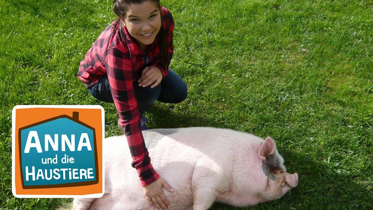 Download Minischwein | Information für Kinder | Anna und die Haustiere