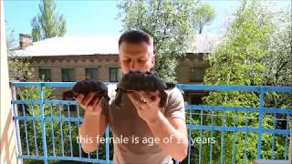 рождение Средиземноморских черепах. The birth of Testudo Graeca