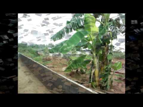 HSH ขายที่ดินบ้านมะเดื่อสวยน้ำใส โพรงมะเดื่อ นครปฐม