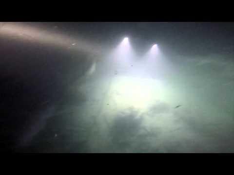 Alimata Notturna con squali