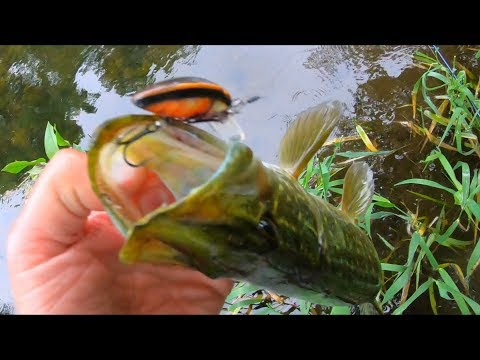 Pike Eat It! Should Be This Fishing Lure In Top 10 For Chub, Bass, Perch, Asp?
