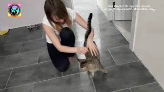Кот из приюта знакомится с новым домом Первый раз в квартире и все любопытно.