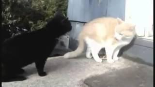 Бля у него валына! Коты