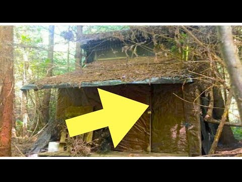 Forest Ranger Stumbles Upon A Mysterious Canin In The Woods With A Huge Surprise Inside