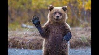 Бассейн, игрушки, бокс для отдыха  Жизнь медведей в приюте