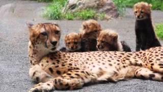 実験! 猫に鏡を見せてみた,動物の面白いビデオ,動物の面白い動画,動物...