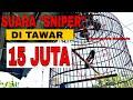 Juta Belum Di Jual Gan Burung Kacer Juara Di Bengkulu  Mp3 - Mp4 Download