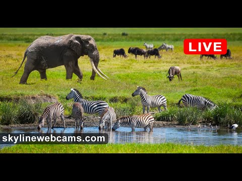 Live Webcam from Kenya