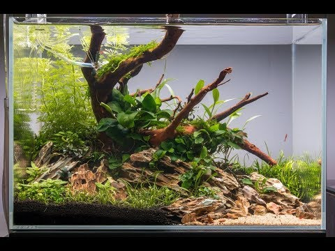 Non Co2 Aquascape Tutorial How To Set Up An Easy Low Energy Aquascape Youtube