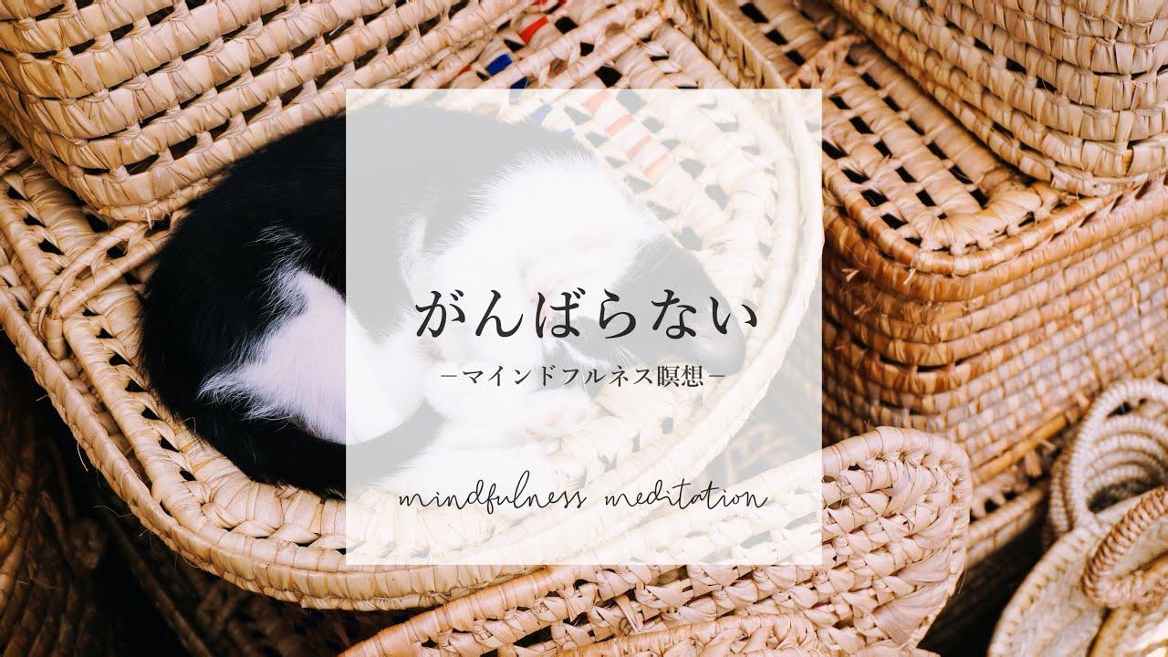 【夜の瞑想】秋の夜長、自分を見つめる時間🌾 | 寝る前のマインドフルネス | 寝ながら誘導瞑想 ASMR