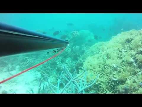 Chasse sous-marine en Nouvelle Calédonie - ST-VINCENT 21.09.2013