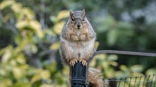 The Squirrel, the Physicist and the Bird Feeder