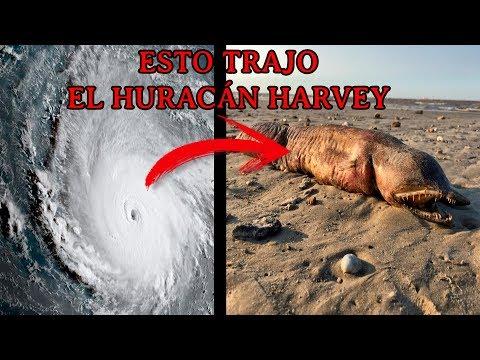 El huracán Harvey trajo una Extraña Criatura del Océano (No saben que es)