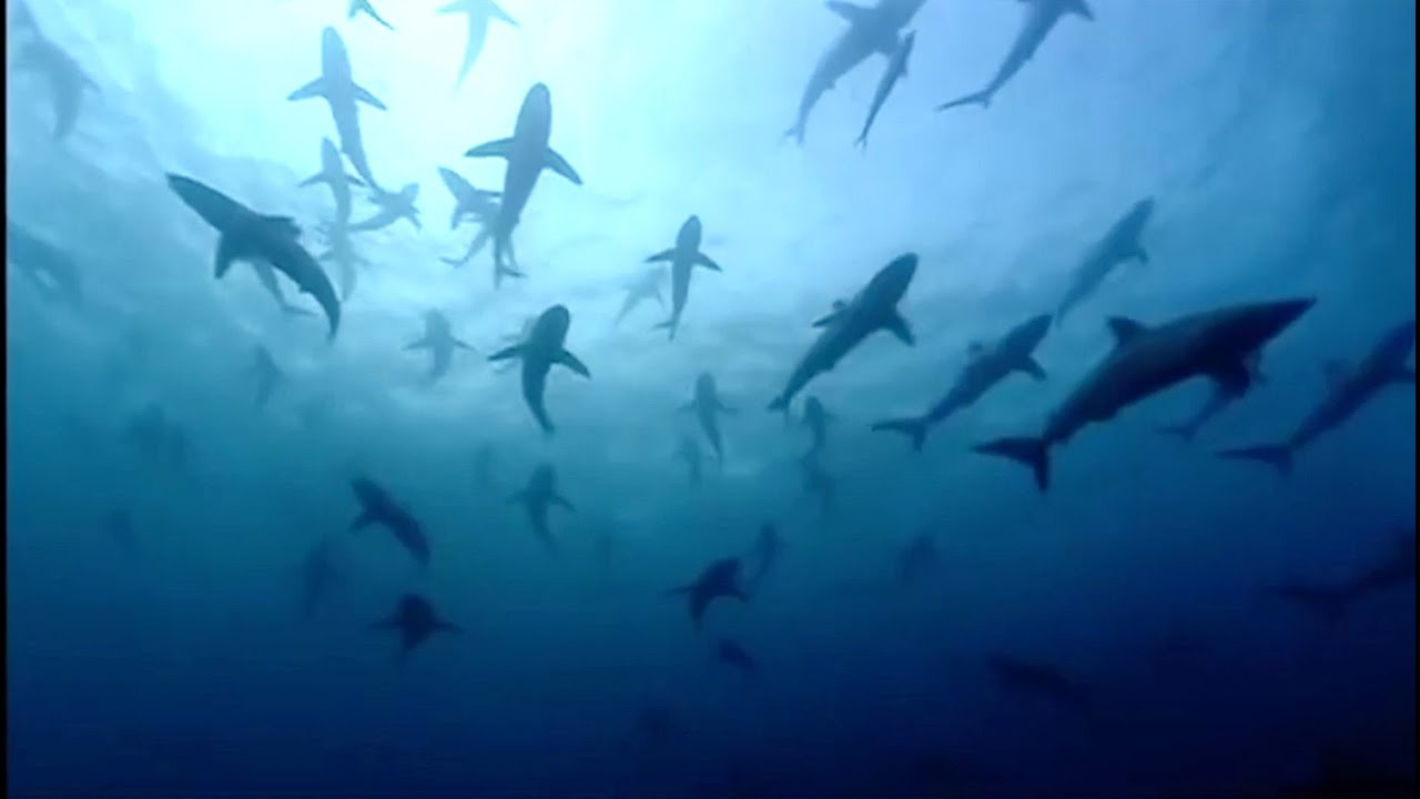 The Blue Planet Collection | Part 1 |  BBC Earth