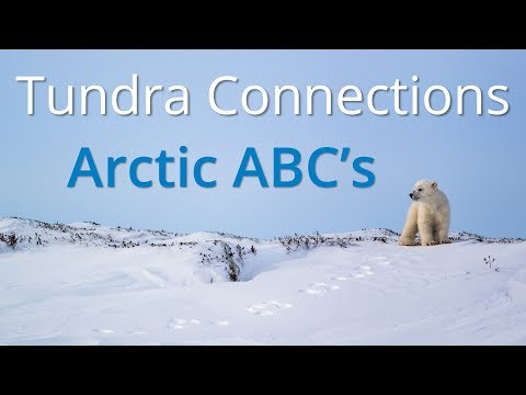 Tundra Connections Arctic ABCs