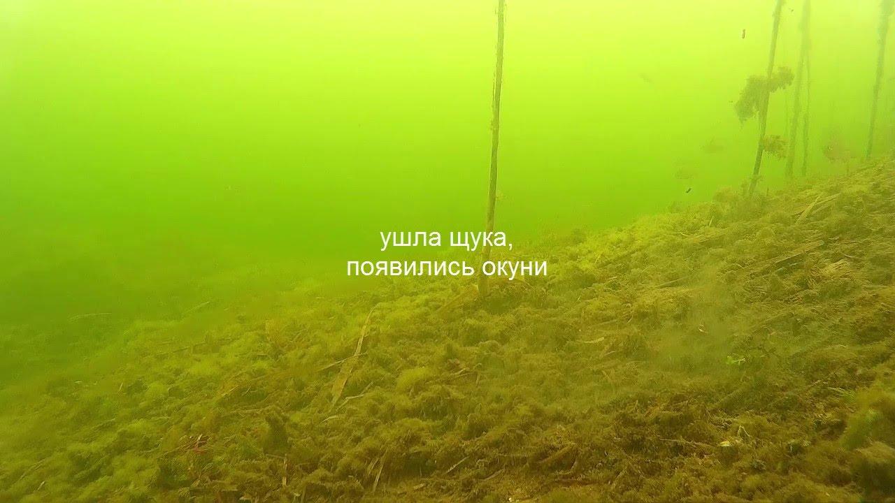 Зимняя рыбалка. Подледная съемка. Большая щука. Окуни .игра балдой под водой