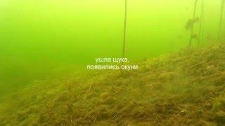 Зимняя рыбалка. Подледная съемка. Большая щука. Окуни .игра балдой под водой(Зимняя рыбалка на озере! Глухозимье. Подводная съёмка . В кадр попала щука! и как всегда окуни. Игра оснастк..., 2016-03-15T08:35:08.000Z)