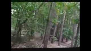KROSS HEXAGON X6 - Jazda po lesie