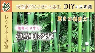 家具作りにトクサ!驚異の研磨力!?植物のやすり砥草(トクサ)の使い方