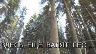 лиственница  лучший материал из дерева