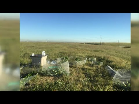 UT student growing food on soil atop landfill