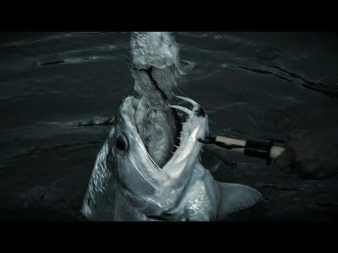 Vampire Fish | River Monsters