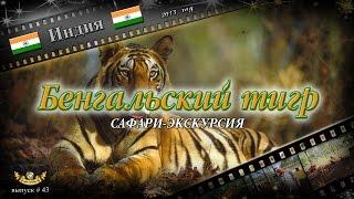"""#43 """"Бенгальский тигр"""" сафари-экскурсия (Индия)"""