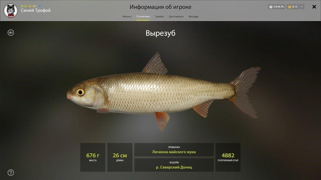 Русская рыбалка 4. РР4. р. Северский Донец - Вырезуб? или сонный стрим?))