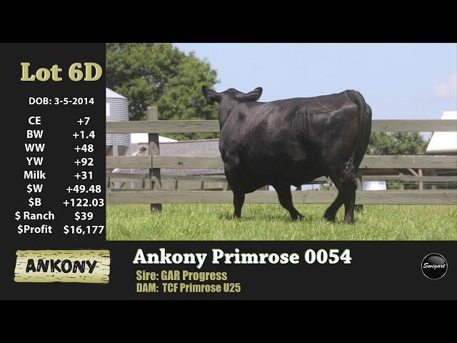Ankony Lot 6D