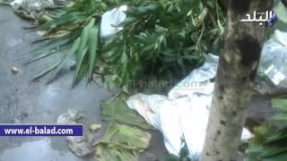 بالفيديو.. أكوام القمامة تحاصر ضريح سعد زغلول