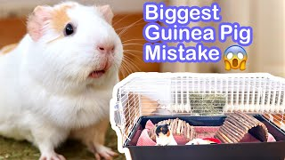Worst Mistake to Make as a Guinea Pig Owner