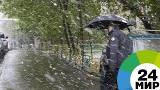 Природная аномалия: в Казахстане прошел весенний снегопад - МИР 24
