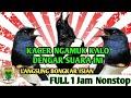 Kacer Ngamuk Bongkar Isian Kalo Dengar Suara Masteran Ini  Mp3 - Mp4 Download