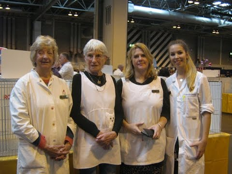 A Trainee Stewards Experience of the GCCF Supreme Cat Show 2016