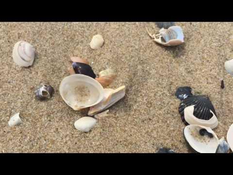 Natural Sea Shell Artistry at Long Beach Island New Jersey
