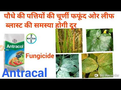 Bayer Antracal Fungicide || प्रोपिनेब + ज़िंक 70%WP