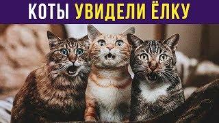 Приколы с котами. КОТЫ ВПЕРВЫЕ УВИДЕЛИ ЁЛКУ | Мемозг #150