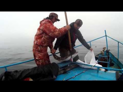 Рыбалка на палтуса
