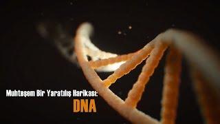 DNA - Vücudun gizli hazinesi