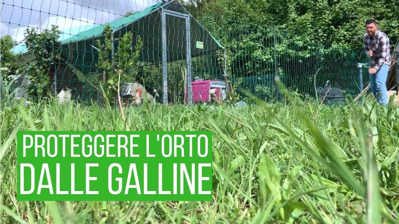 Recinzione Per Galline.Recinto Mobile Per Galline Come Ho Fatto Senza