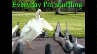 Everyday I'm Shuffling - Goose