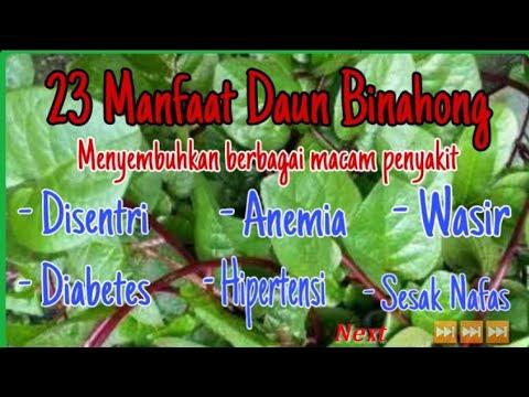 dieta de diabetes takaran daun binahong untuk