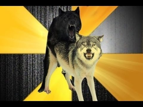 Advice Dog, Courage Wolf and Insanity Wolf motivating you!