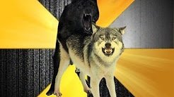 hqdefault - Depression Dog Insanity Wolf